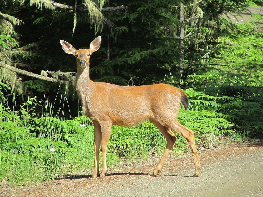 deer-cc