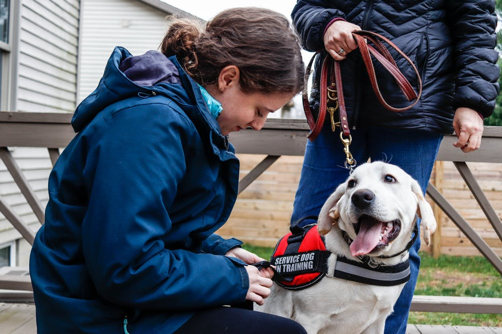 <p>Client Karen McClure puts a vest on psychiatric service animal Finn on Nov. 10, 2019 in client Louise Harder&#x27;s backyard.</p>