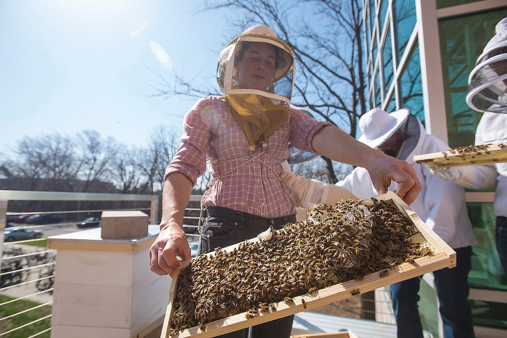 <p>Beekeeper and PhD graduateMeghan Milbrath displays a panel of the beehive April 17, 2015, on the balcony of Bailey Hall in Brody Complex. These students will nurture the beehive to maturity which they hope will enable the bees to pollinate plants in their greenhouse. The students also are combating the current declining bee population with their project. Erin Hampton/The State News</p>