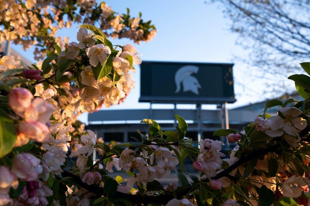 The MSU stadium behind spring flowers on April 29, 2021.