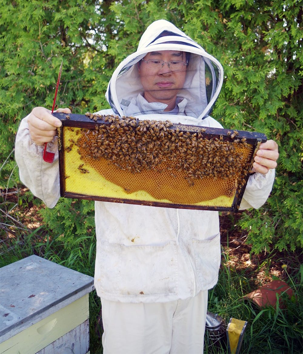 <p>Zachary Huang is showing the bees hive, May 22, 2015, in the bees study field lab, in East Lansing. Huang checked each box of bees. He has to make sure if each box has its regular production. Yuanzhe Zhuang/The State News</p>
