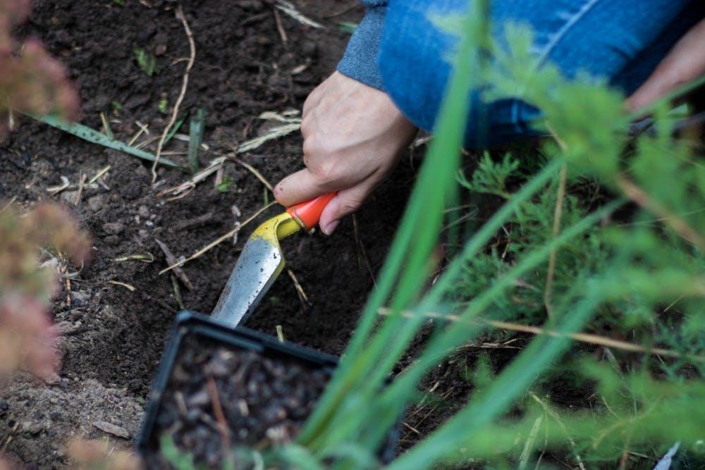 Genetics sophomore Haaniya Mallick digs dirt to plant irises outside of Olin Health Center on Oct. 10, 2018.