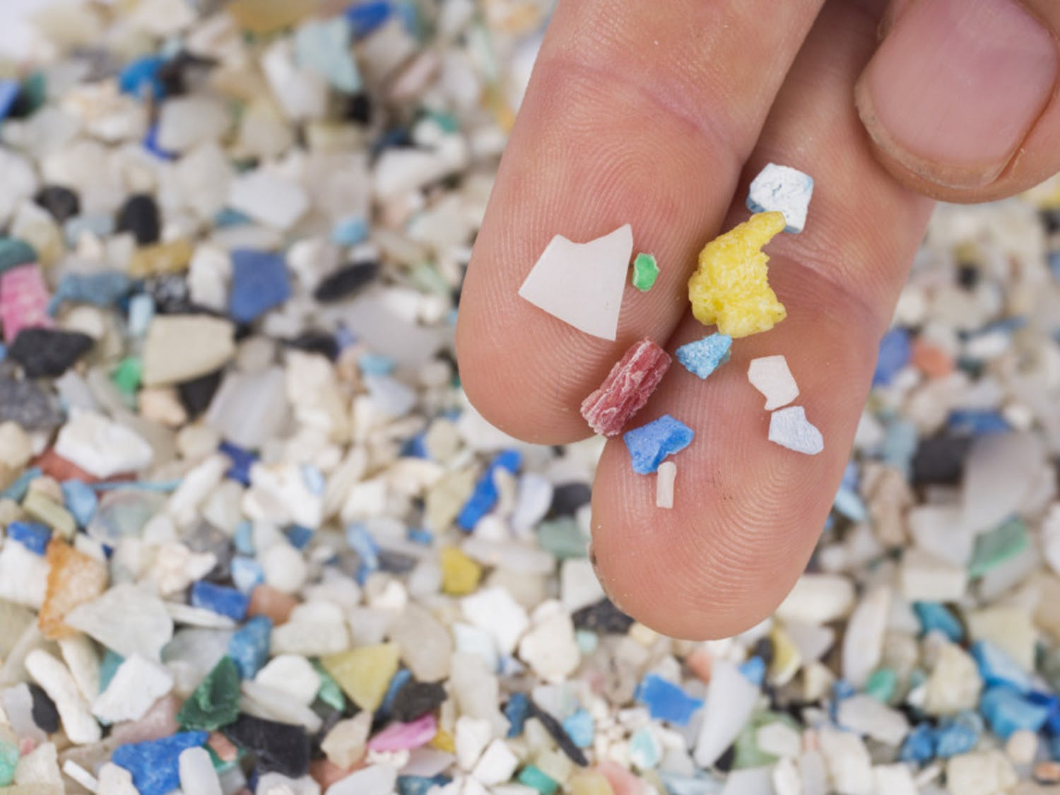 A pile of microplastic collected by The Florida Microplastic Awareness Project. Plastics like these are among the top ocean pollutants, according to Savanna Barry, a Cedar Key volunteer coordinator with the project.