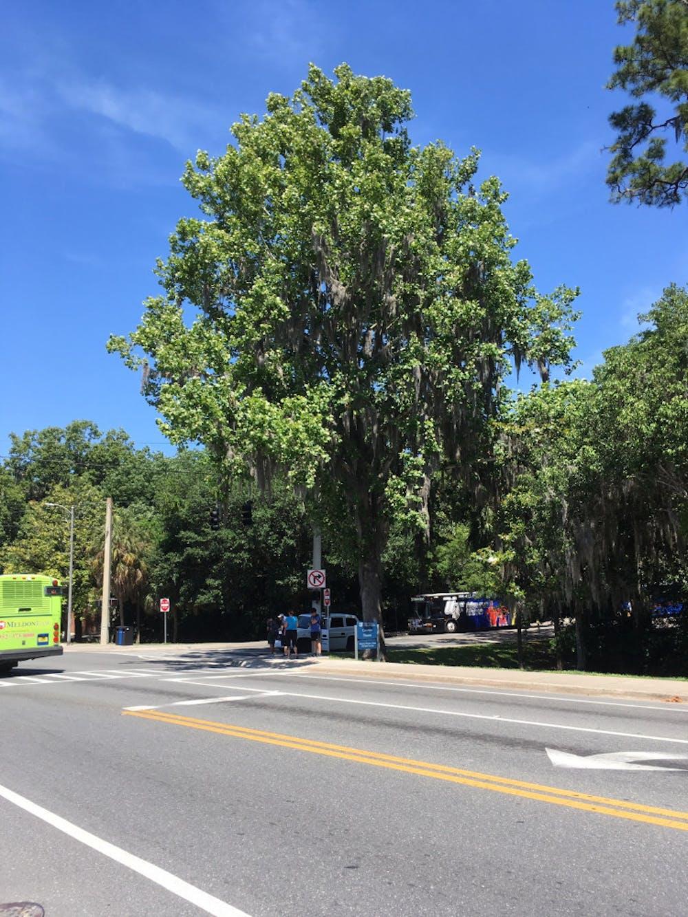 <p><span>UF's moon tree is near the J. Wayne Reitz Union Bus Loop.</span></p>