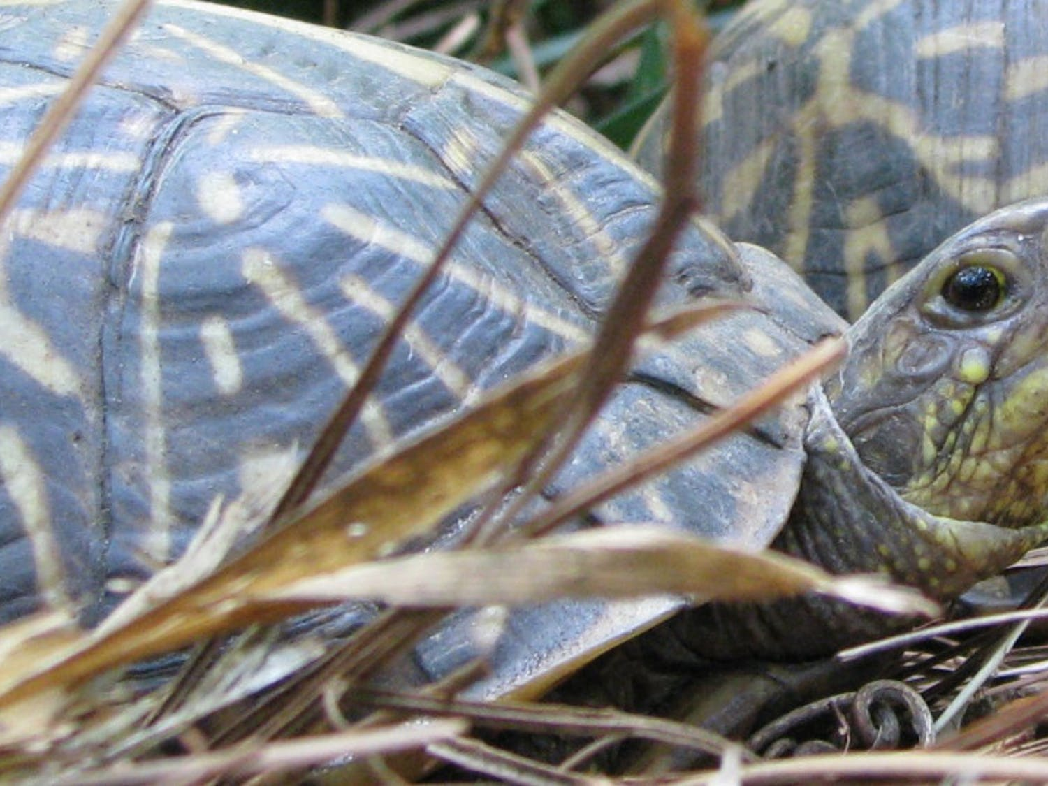 David Beckham, a box turtle, is one of four animals still missing after 11 were stolen from the Santa Fe College Teaching Zoo. Another box turtle and two gopher tortoises are also still missing.