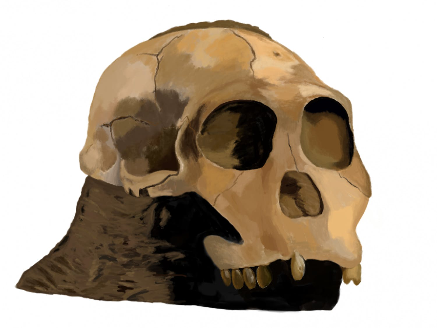 Molly Selba, a 27-year-old Ph.D. student studying biological anthropology at UF, drew two hominid relatives of humans with the Procreate app for the showcase.