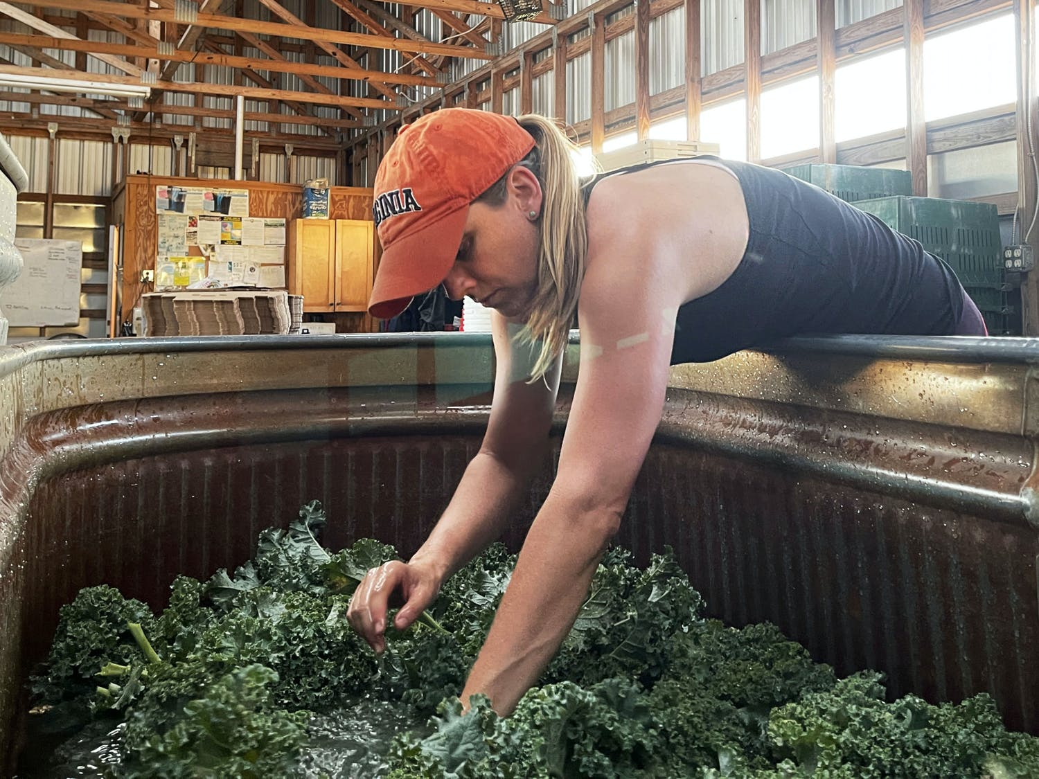 UF professor Hannah Mathews, 43, washes kale after volunteering to help harvest vegetables at Siembra Farm in Gainesville on Tuesday, May 4, 2021. She was among many volunteers who worked to harvest extra vegetables to give to local families in East Gainesville. (Photo by Joelle Wittig)
