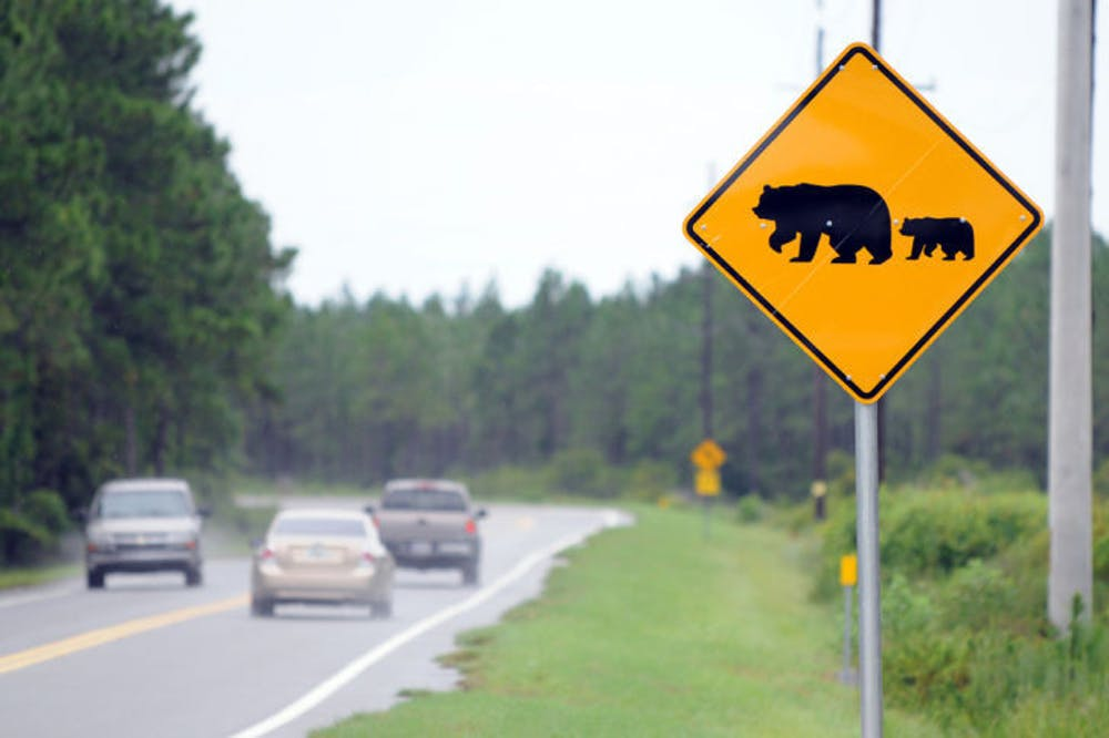 """<p class=""""p1"""">A meeting was held in March at Gainesville City Hall by the Florida Fish and Wildlife Conservation Commission, which provided this photo, to discuss black bears. The bear population is growing across the state.</p>"""