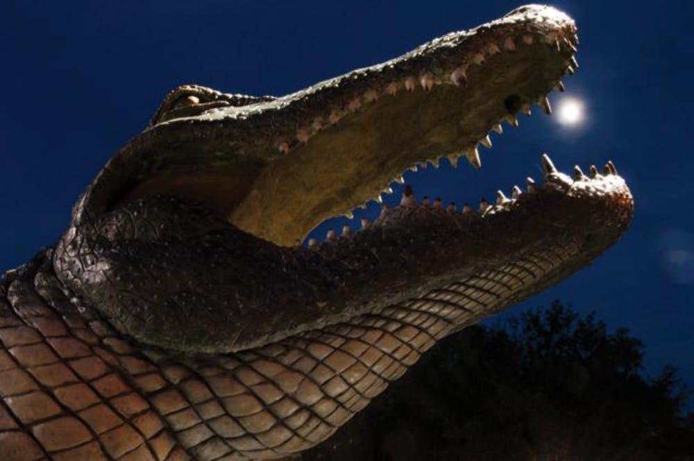 stock alligator