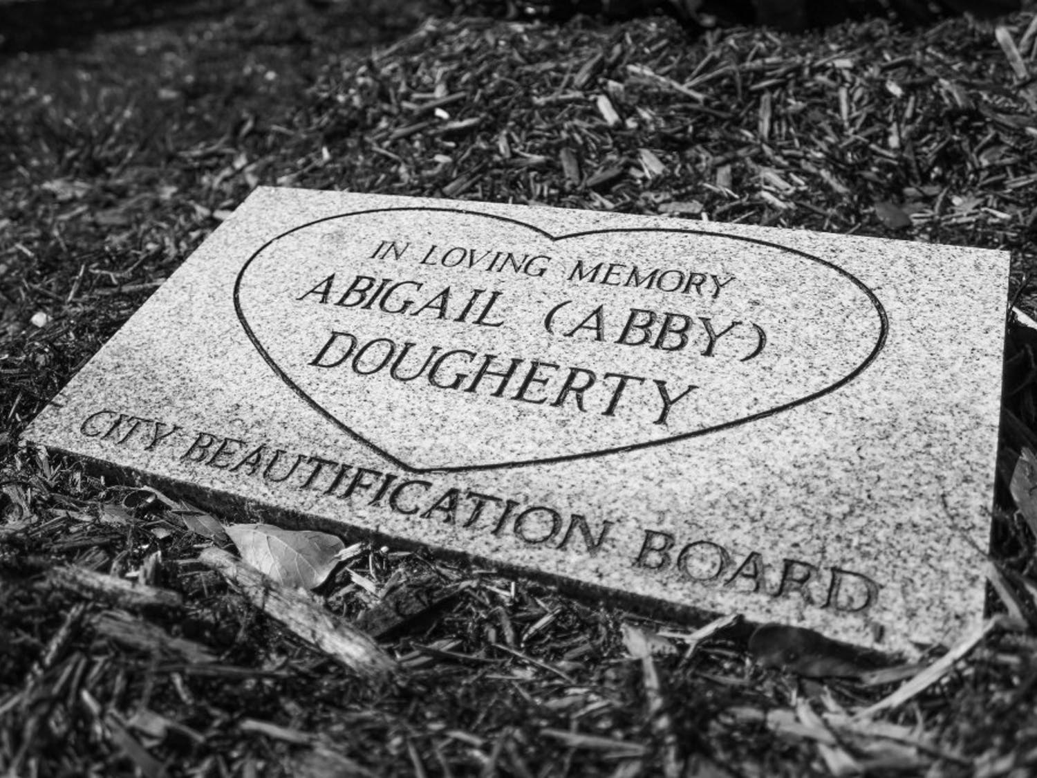 A close-up of the plaque that was made in honor of Abigail Dougherty. The plaque rests below the southern magnolia treeplanted for Dougherty on Thursday.
