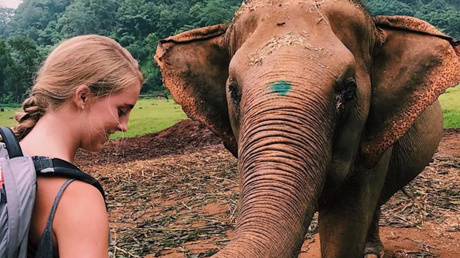 Megan McDowell, a 19-year-old UF animal sciences sophomore, bonds with an elephant she's been treating in Chiang Mai, Thailand.