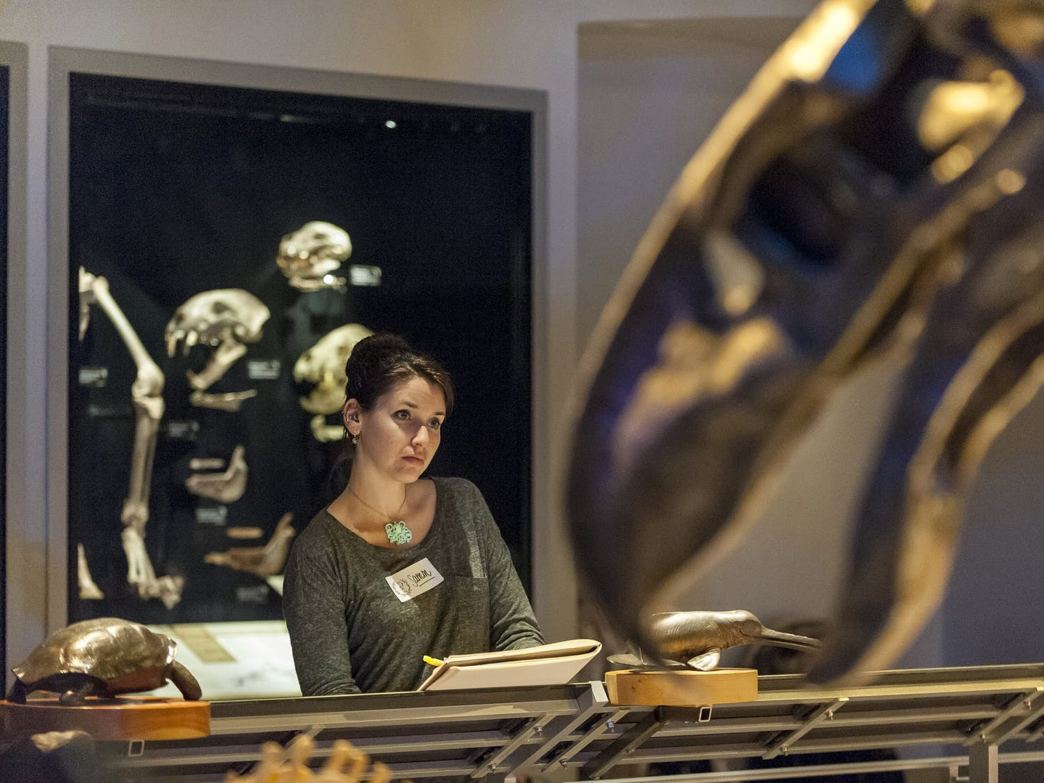 The beauty of science was displayed starting Feb. 8, 2019 at the Florida Museum of Natural History.