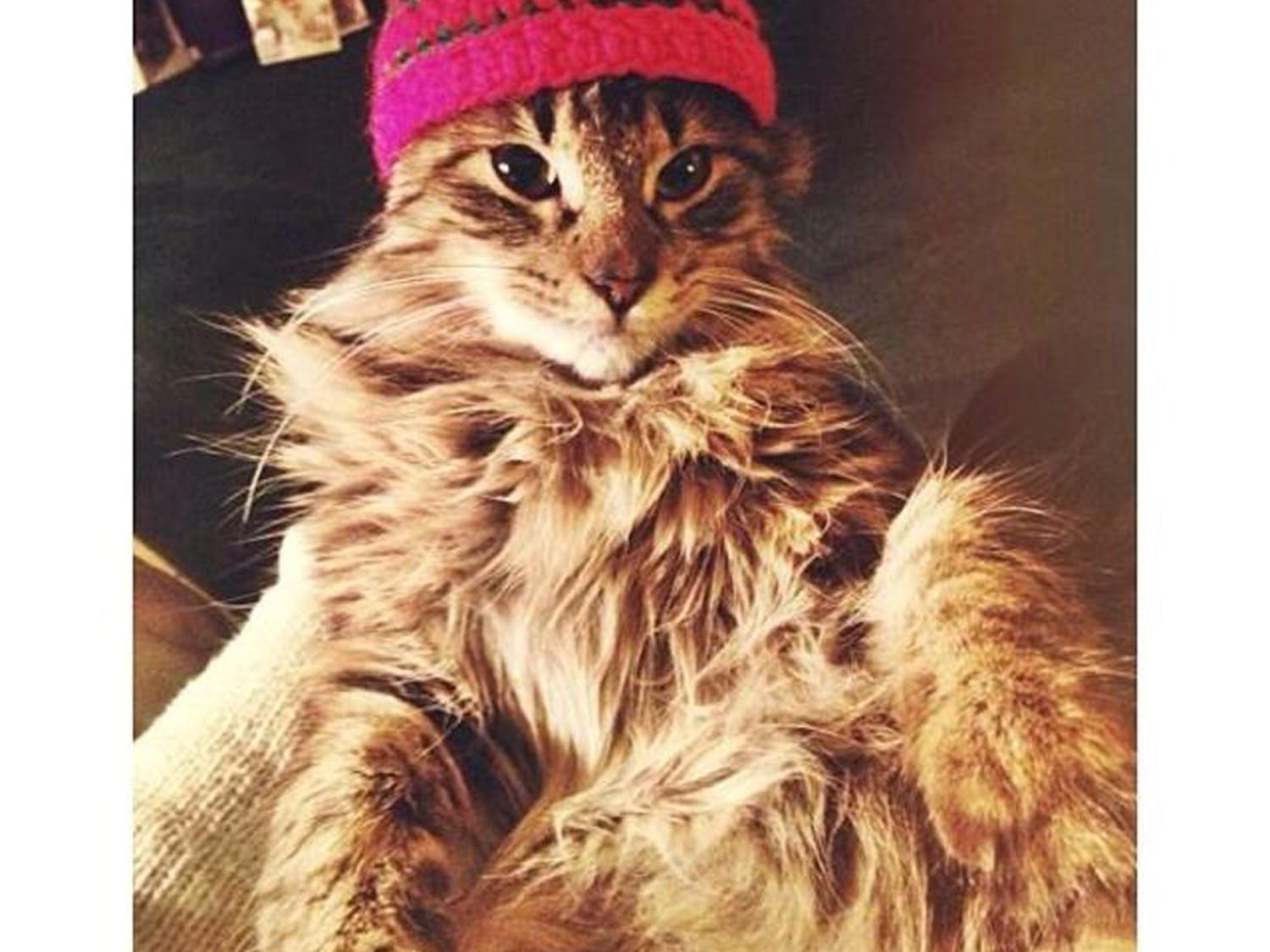 Tinder is a dating app that lets two people strike up a conversation after mutually finding each other attractive. Avenue writer Alexa Volland's kitten Santa Paws, pictured above, had 222 matches in the span of two days.