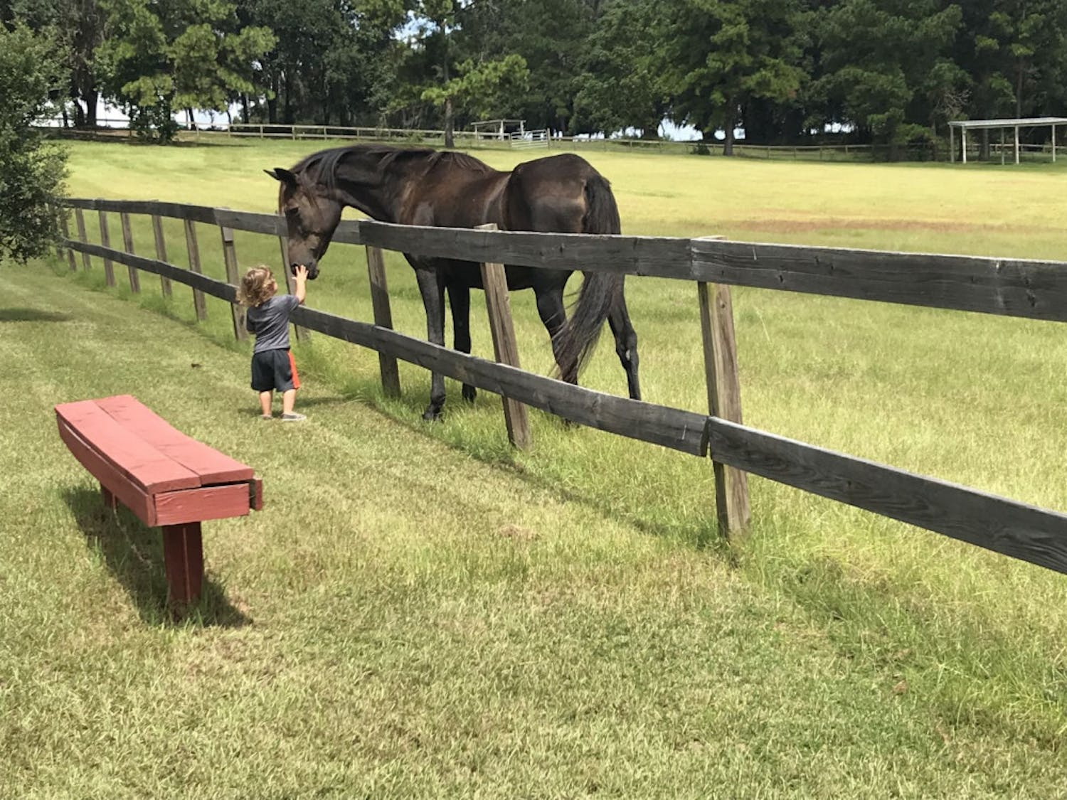 A young boy, Liam, and a horse become friendly, as he pets the horse's nose. Liam's family, meanwhile, has the attention of another horse nearby.