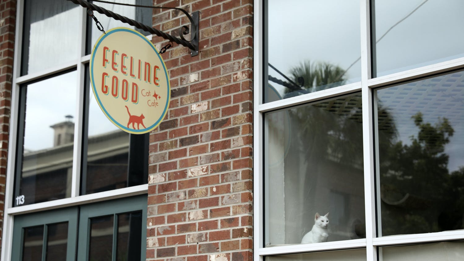 A white cat sits at the window of the Feeline Good Cat Café on Sunday, July 4, 2021. At the café, visitors can pet cats while enjoying beverages.