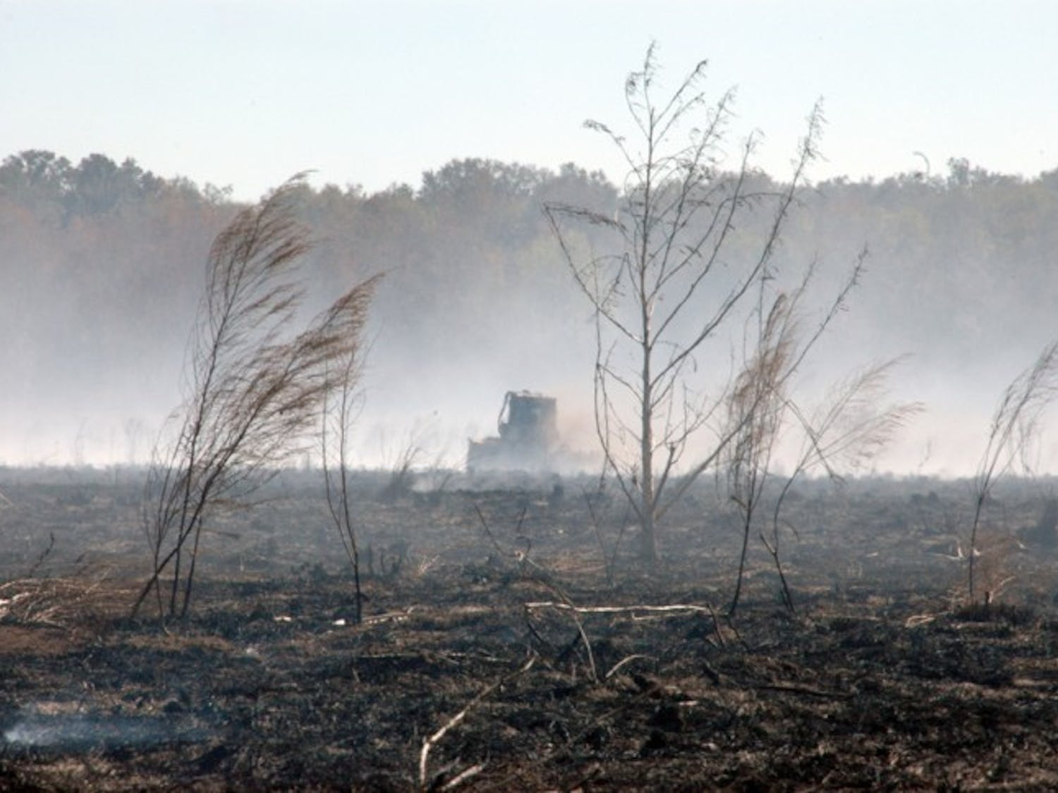 A tractor drives across a burned section of Paynes Prairie Preserve State Park on Monday afternoon. The smoke from the prairie fire caused a series of crashes Sunday morning that killed at least 10 people.