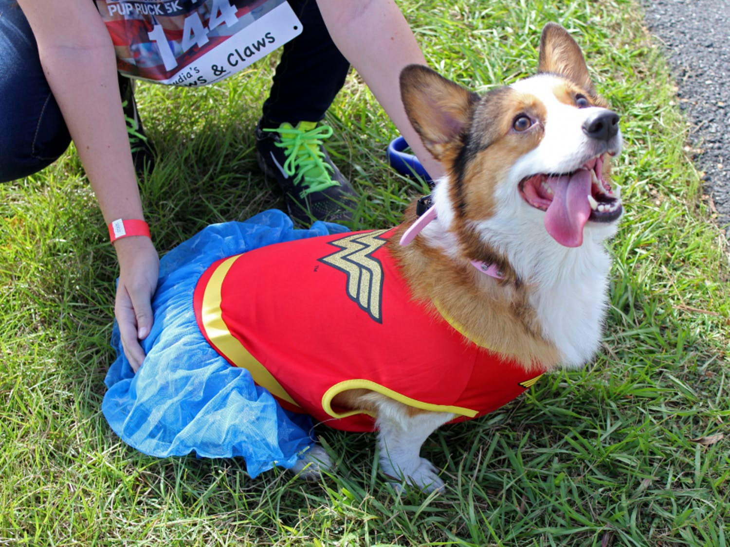 Pez, a 5-year-old Pembroke Welsh corgi, looks up at attendees of the first Pup Ruck 5k at Depot Park on Sunday. The event was held to raise money for the Pets and Patriots Foundation, which helps veterans with post-traumatic stress disorder acquire service dogs.