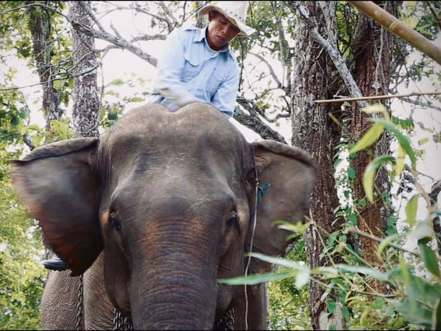 """Mr. Tong and his elephant, Mae Dok, are the stars of """"Elephant Keeper,"""" one of the films being shown at Cinema Verde 2021."""