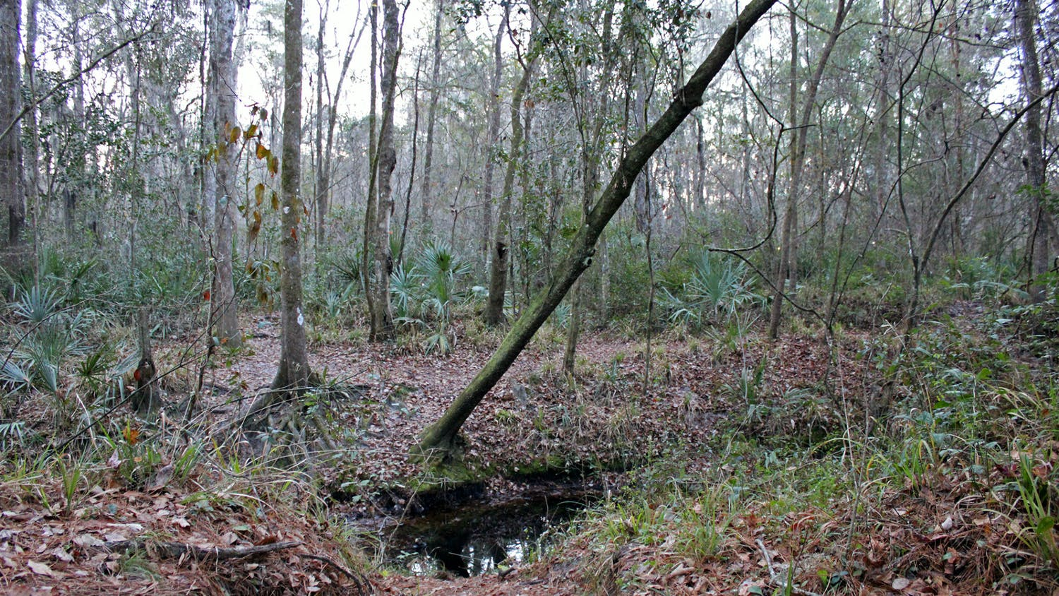Trees line a creek next to the hiking trail at Loblolly Woods Nature Park in Gainesville on Friday, Jan. 15, 2021. The city commission has approved a  plan that will protect Gainesville's urban forest from development projects.