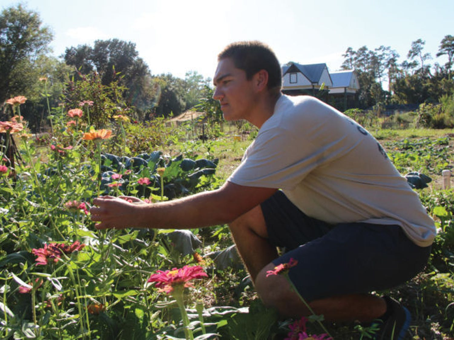 Andrew Krupinski, a 18-year-old freshman in the College of Agricultural and Life Sciences, observes plants in the Student Agriculture Garden across from Lake Alice on Wednesday afternoon.