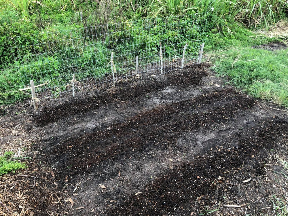 <p><span>Composting is a sustainable process that reduces greenhouse emissions. Daisy Andrews, a 22-year-old UF natural resource conservation senior, adds compost (the darker lines) on top of the seeds she planted.  </span></p>