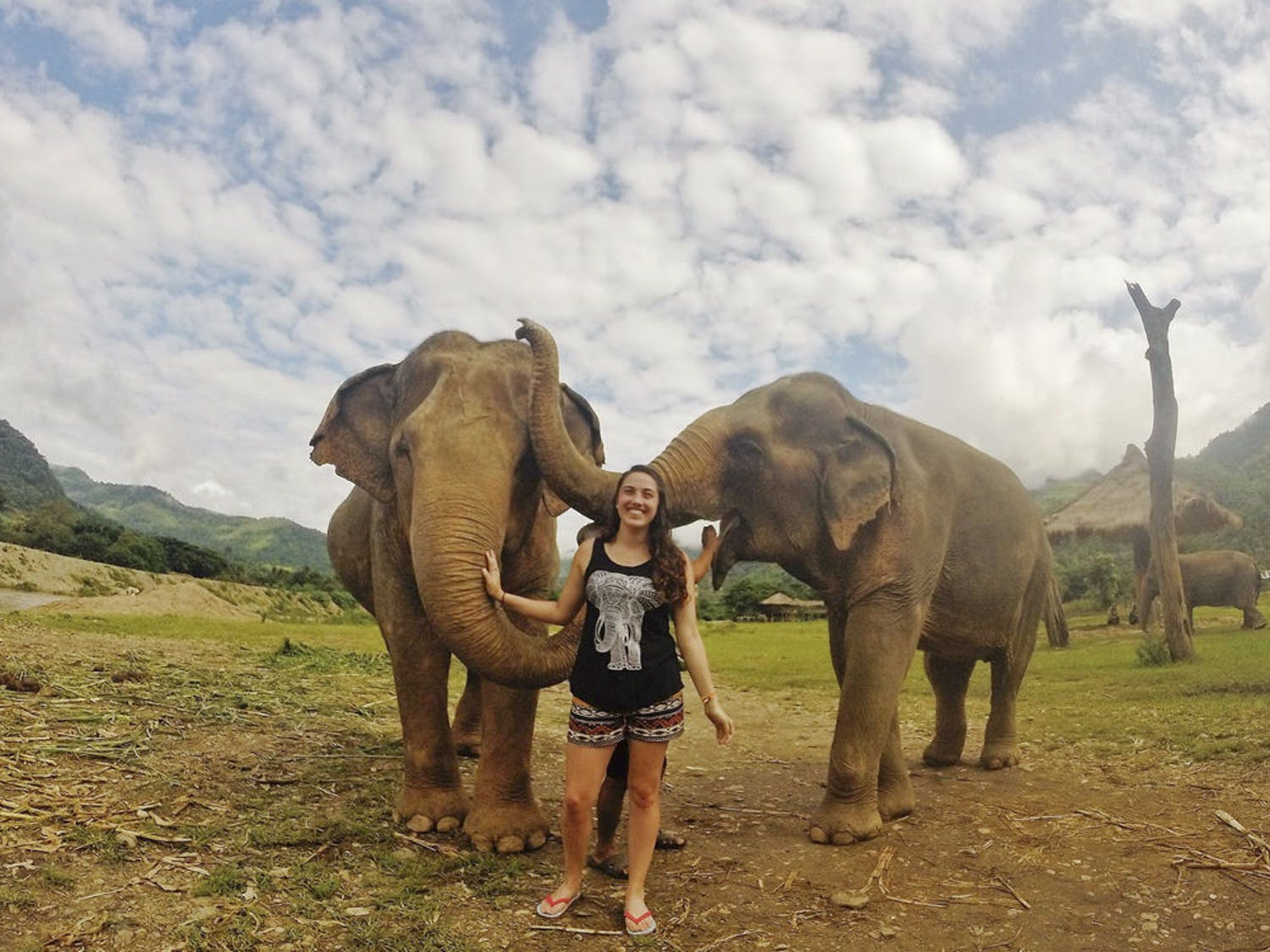 """Trisha Seppey, a 23-year-old Santa Fe veterinarian junior, poses with elephants at the Elephant Nature Park in northern Thailand during her study abroad trip. Seppey chose the program, """"Loop Abroad,"""" because it allowed her to help injured animals such as elephants and dogs."""