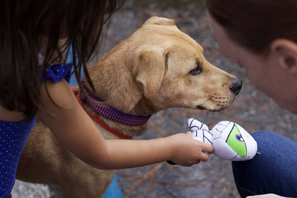 """<p dir=""""ltr"""">Kylie Gurthie, 3, and a volunteer play with the newly adopted 5-month-old dog Joey during the Summer Lovin' Adopt-A-Thon at Alachua County Animal Services on August 17.</p>"""
