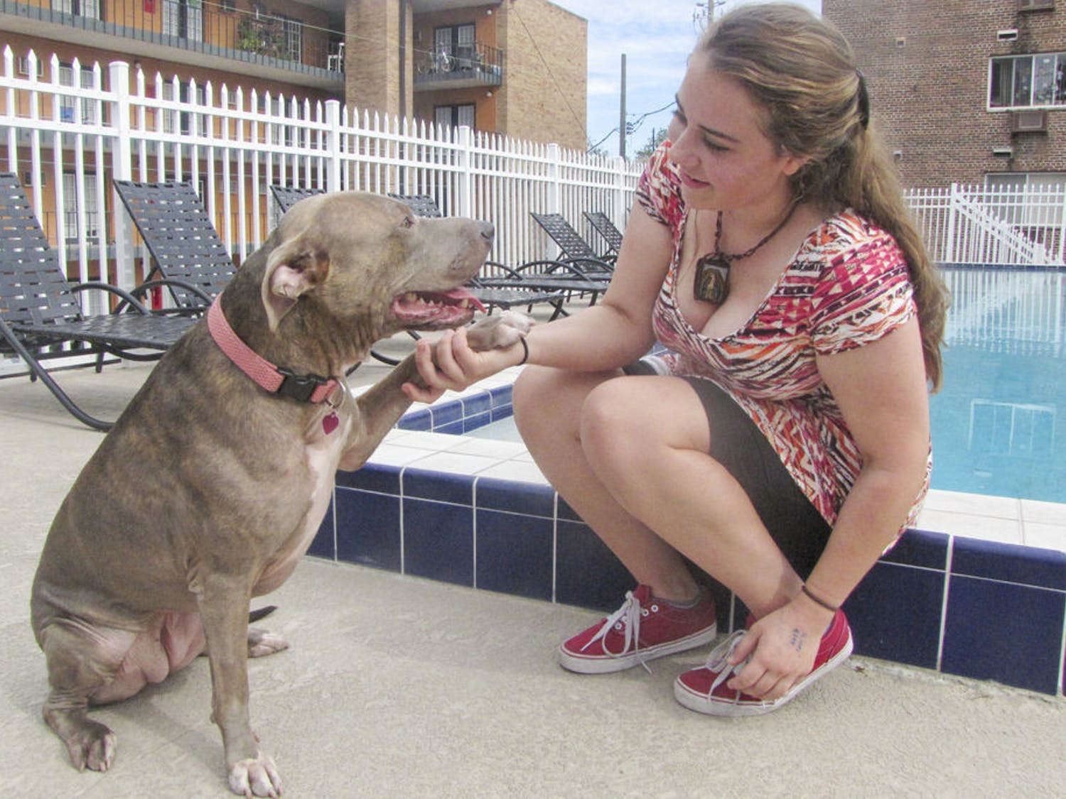 Four-year-old pit bull Stella plays with her foster owner, Plenty of Pit Bulls volunteer JoAnna Platzer, by the College Manor Apartments pool Wednesday afternoon. The organization is struggling to find pit bulls like Stella a home before their foster owners go out of town for the holidays.