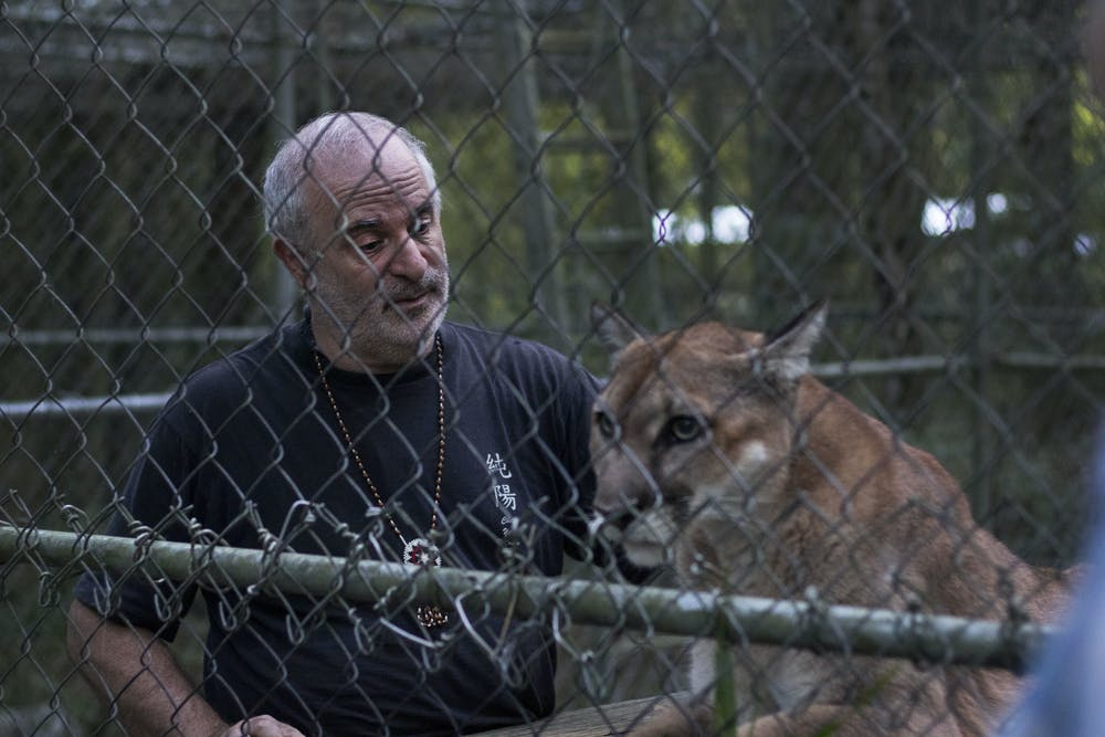 """<p dir=""""ltr""""><span>Bruce Capin strokes Kuwa, one of the three cougars living in the sanctuary at his home, Monday evening after bringing her some grass to eat. Capin said he has had the sanctuary for 20 years and that he takes in cougars that were mistreated or neglected so that they can live out the rest of their lives.</span></p>"""