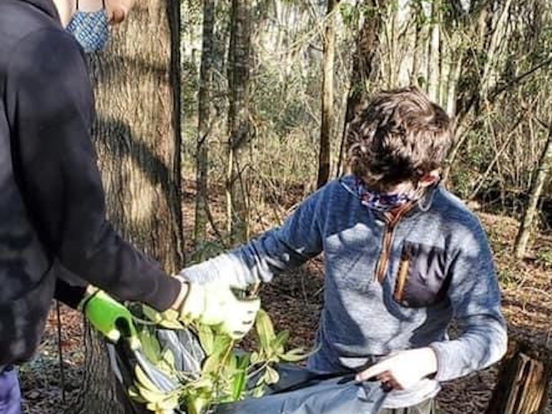 Boy Scout Troop 125 places invasive plants into a plastic trash bag for proper disposal. [Photo courtesy of Rich Bennett]