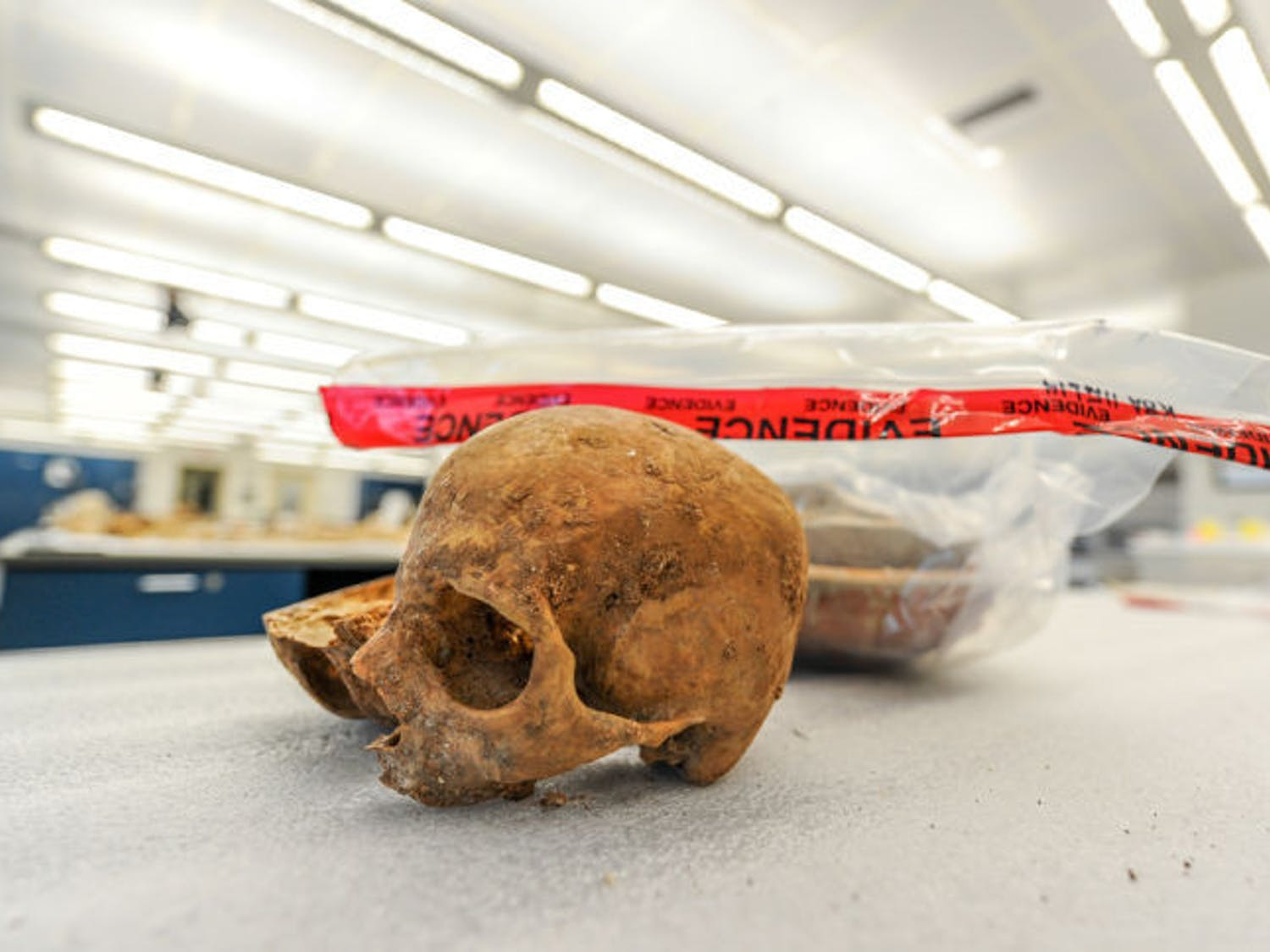 A skull confiscated in Fort Lauderdale from travelers incoming from Cuba was suspected to have been used in voodoo ceremonies. It is part of the C.A. Pound Human Identification Laboratory's collections.