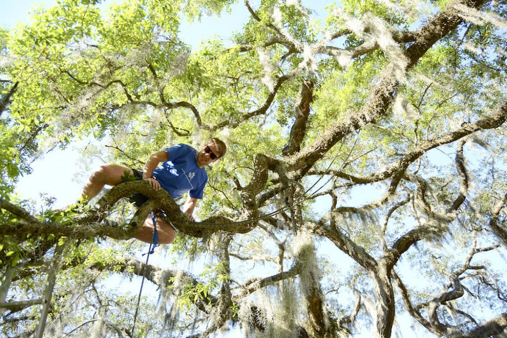 <p>Brennen Zinckgraf, a 21-year-old UF environmental engineering senior and recreational climber, works his way up an oak branch on Turlington Plaza on Tuesday, April 5, 2016, to examine the resurrection fern on the tree for a research project.</p>