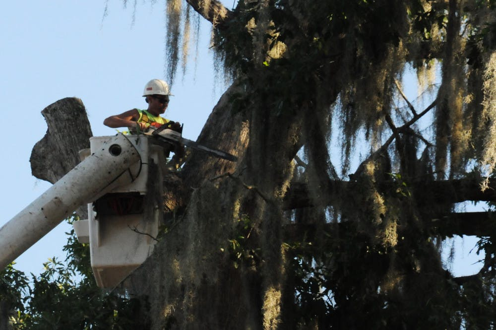 <p>A worker with Gaston's Tree Services uses a chainsaw to remove a limb from Bert, a large bluff oak tree behind UF's Nuclear Sciences Building, is hauled away after being cut off on August 15, 2015. Construction plans called for trees, including Bert, a student favorite estimated to be at least 150 years old, to be cut down.</p>