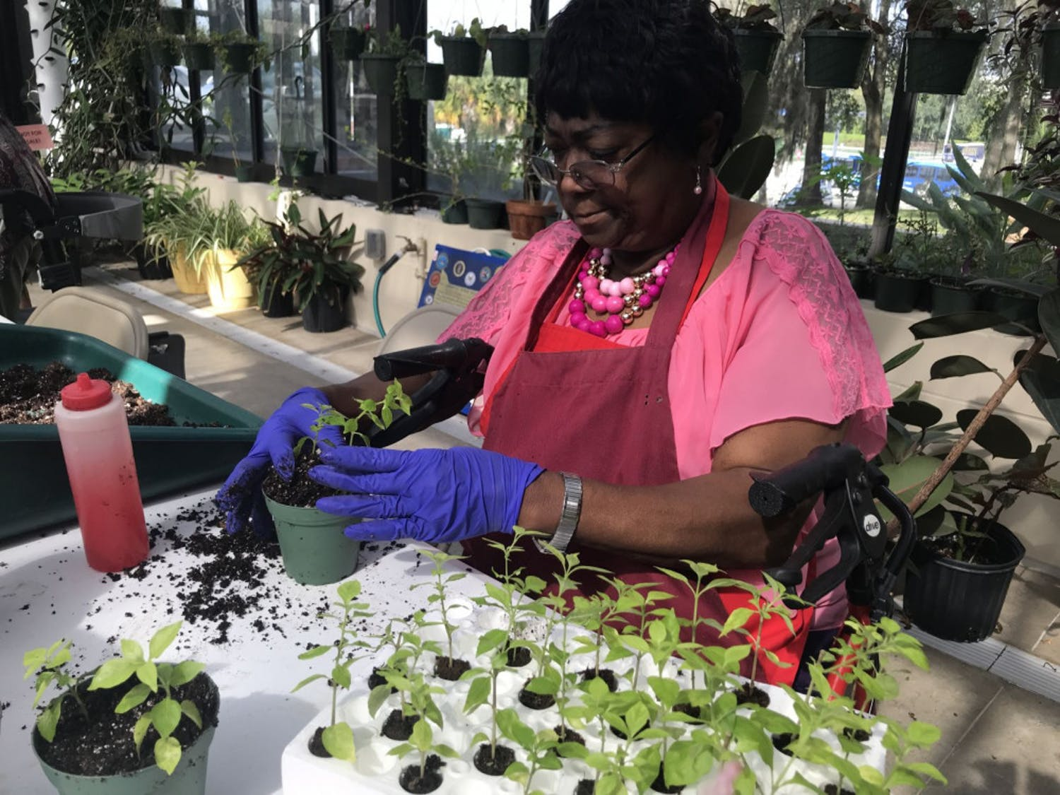 Dessie Robinson, a United States veteran and regular attendee of horticulture therapy, transfers young rabbit ear seedlings into pots. Robinson has attended the program for two semesters after hearing about it from the social work department at the VA.