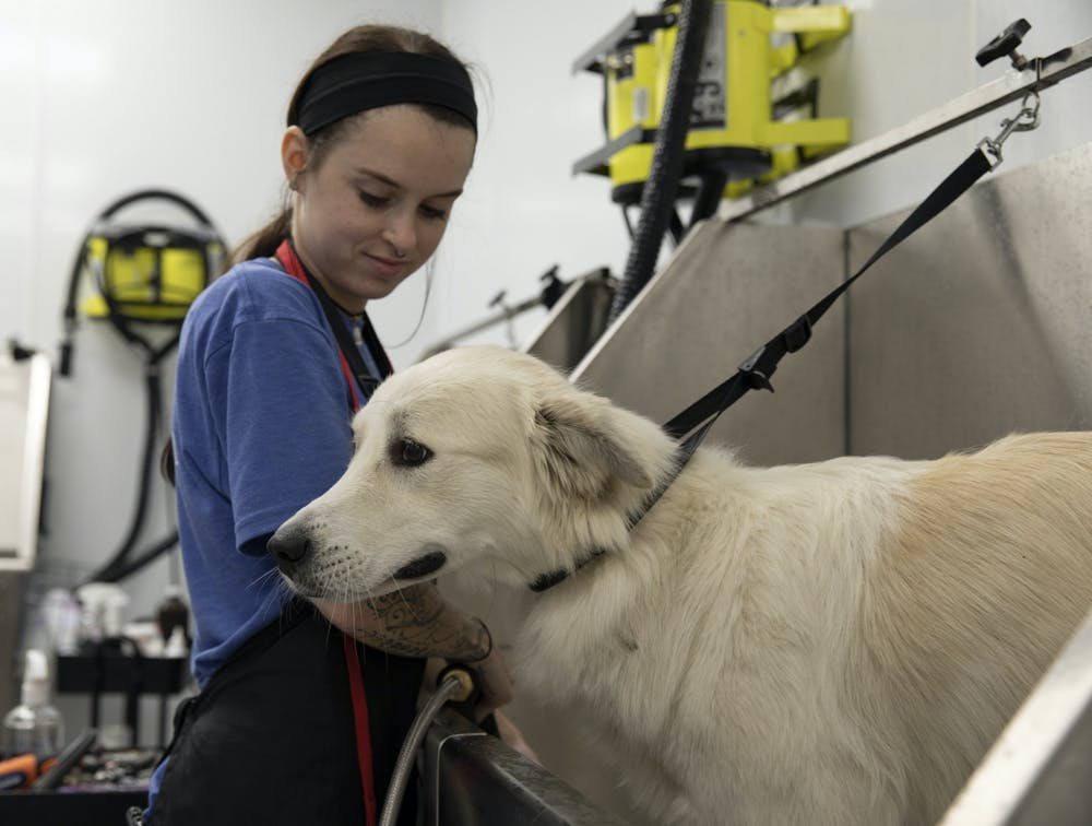 Sarah Headley, a pet groomer at Scenthound, sprays water on Daisy, the dog, on Tuesday, May 25, 2021.