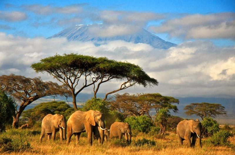 Students on the Tanzania Immersion will possibly go on an excursion to Mt.  Kilimanjaro next summer. Photo Courtesy of www.export.gov
