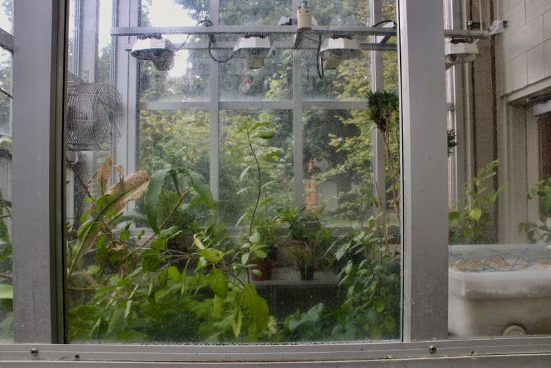 The Swindells greenhouse is currently home to research by two different professors.