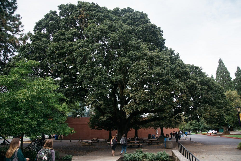 Keeler Trees-11