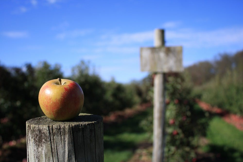 <p>Apple picking remains a potential activity for students looking for something to do over fall break.</p>