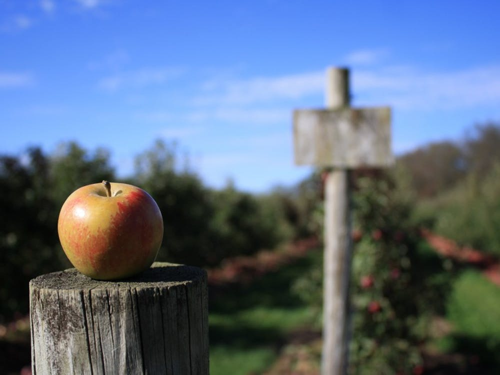 Apple picking remains a potential activity for students looking for something to do over fall break.
