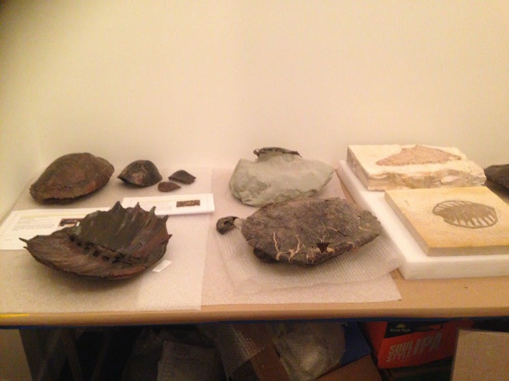 Some of the turtle fossils that will be on display in the Lora Robins Gallery of Design from Nature.