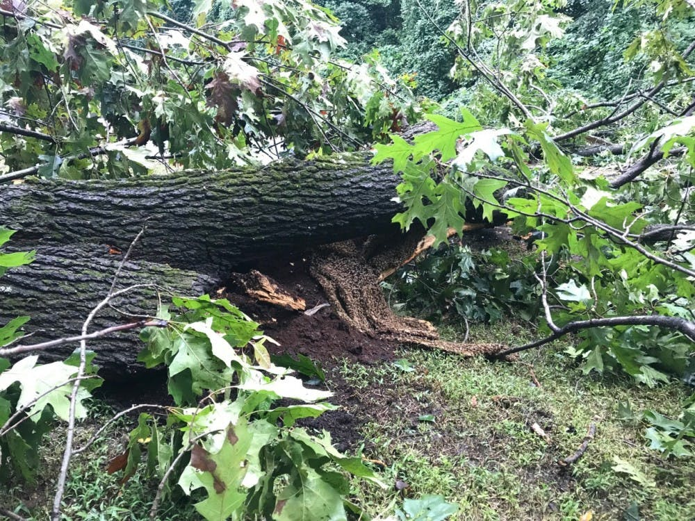 <p>After tornadoes hit the Richmond area in September, 70,000&nbsp;honeybees were found in a fallen tree on Towana Road.</p>