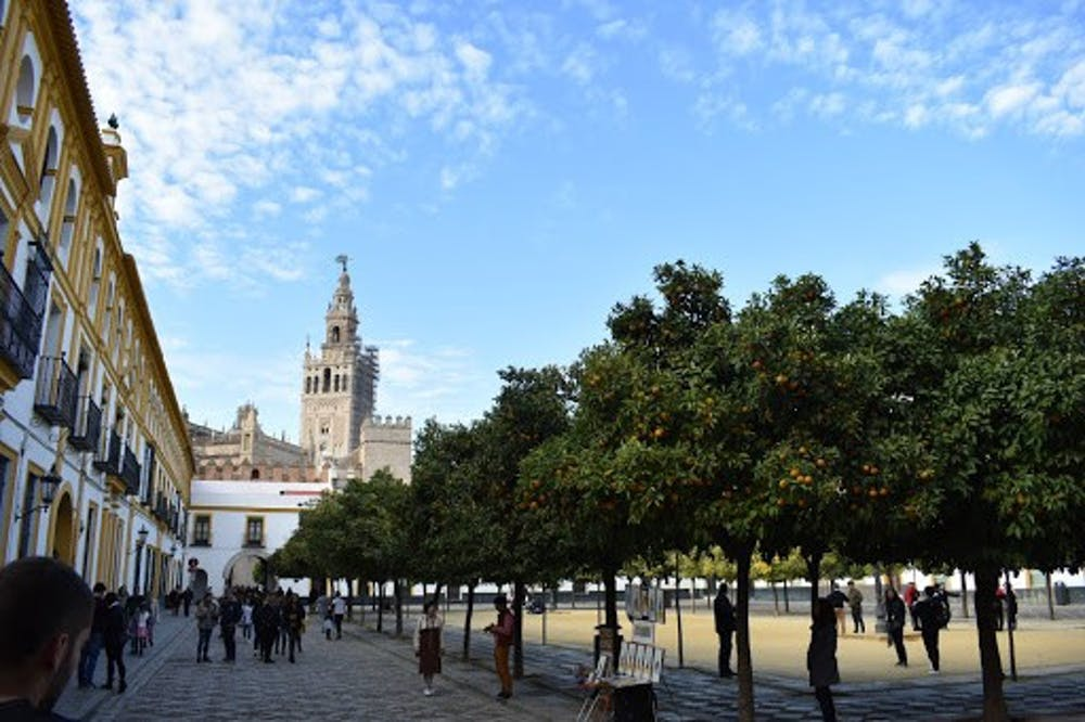 <p>A view of a plaza surrounded by fruit-filled orange trees in December. In the distance, there is the Giralda bell tower of the Catedral de Sevilla.</p>