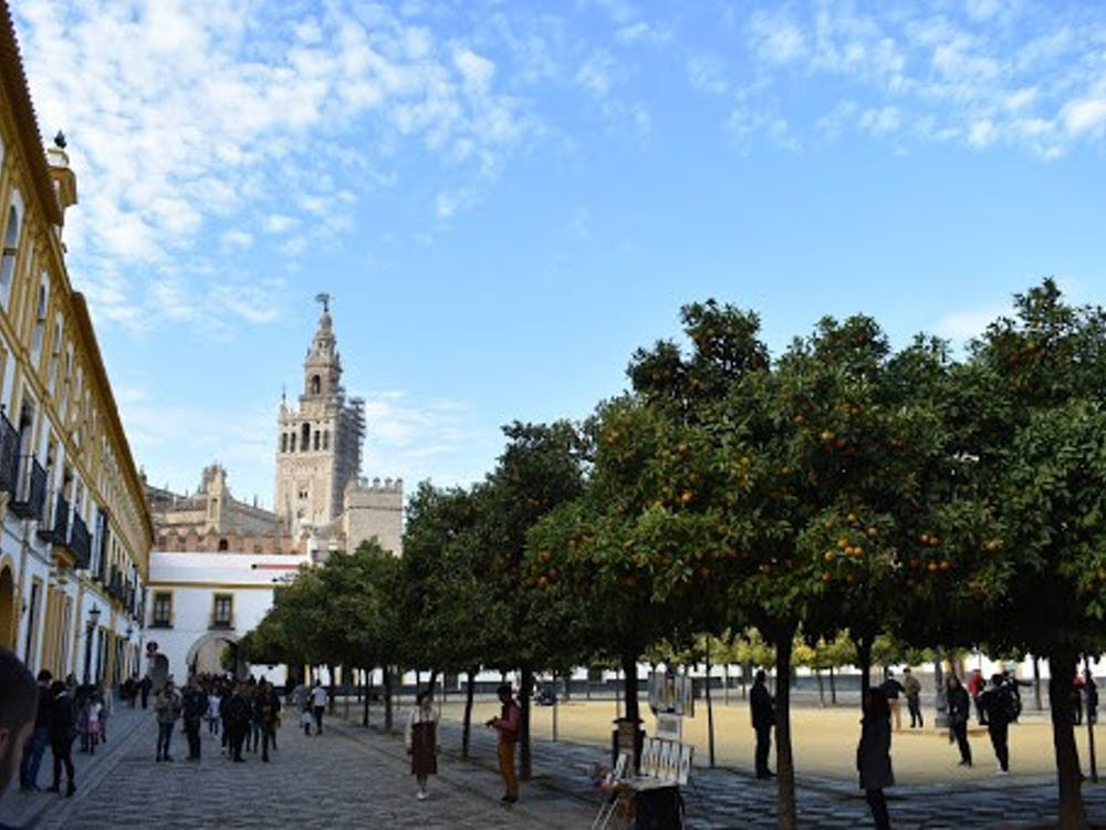 A view of a plaza surrounded by fruit-filled orange trees in December. In the distance, there is the Giralda bell tower of the Catedral de Sevilla.