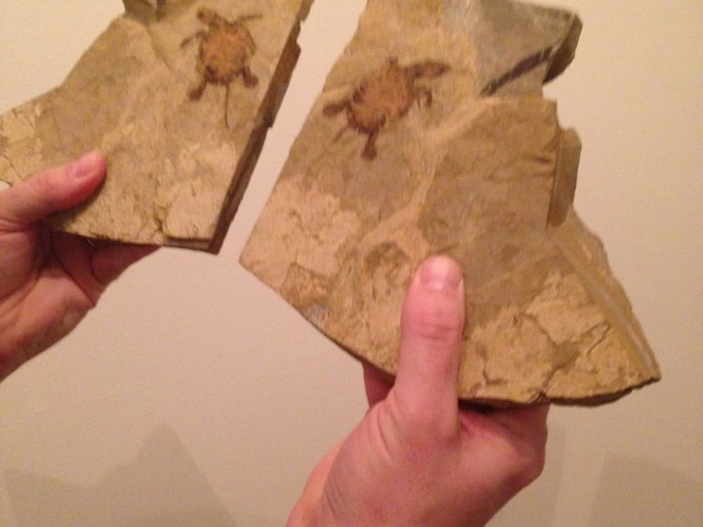 Some of the turtle fossils that will be on display in the Lora Robins Gallery of Design from Nature. The fossils above are specimens from China.