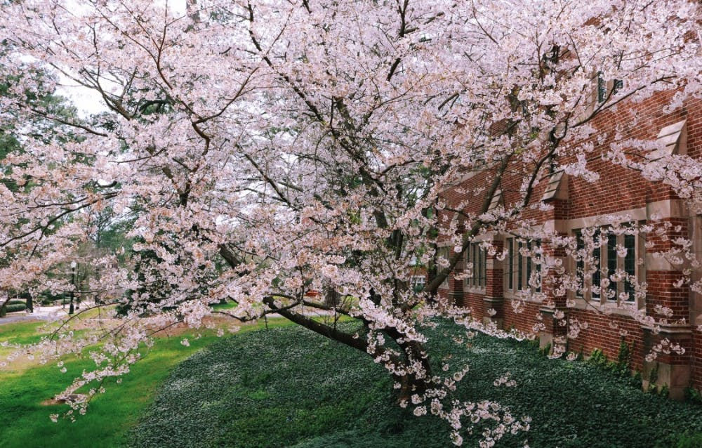 <p>The University of Richmond campus in the spring.&nbsp;</p>