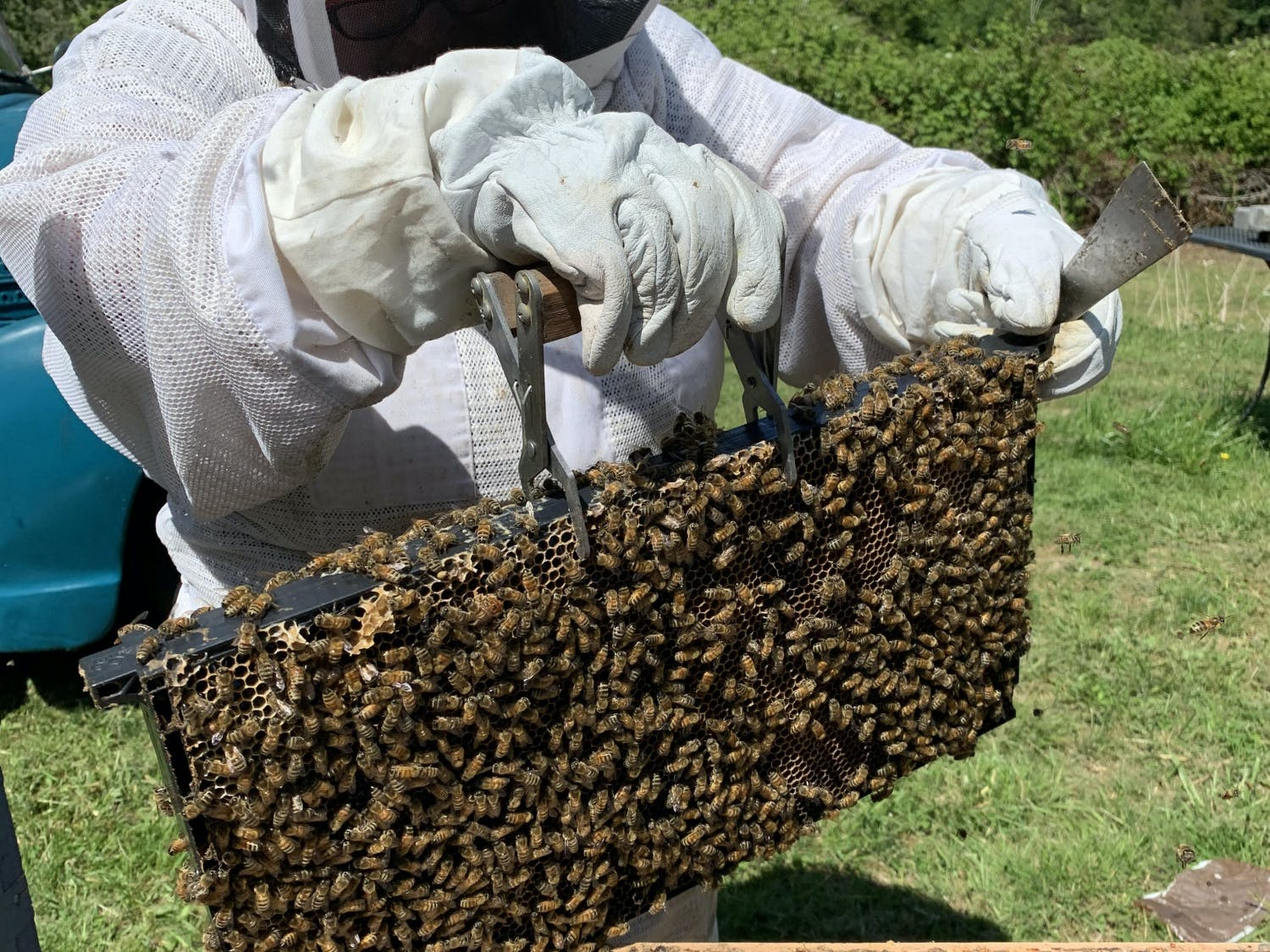 A beekeeper grabs ahold of part of a hive during May in Bellingham, Wash. Beekeeper Marisa Papetti said a late spring may have been a factor in fewer bee sightings in Bellingham this year. // Photo courtesy of Noah Hadley