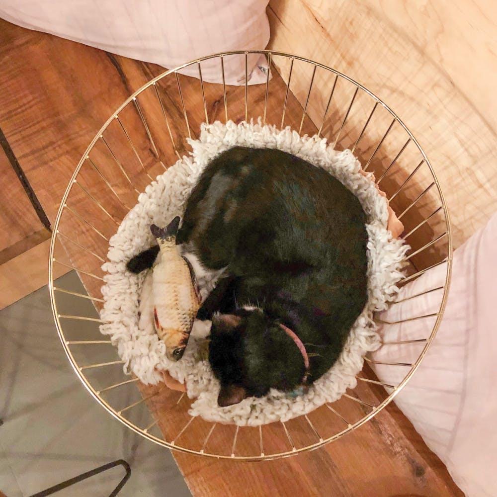 CatCafe-3