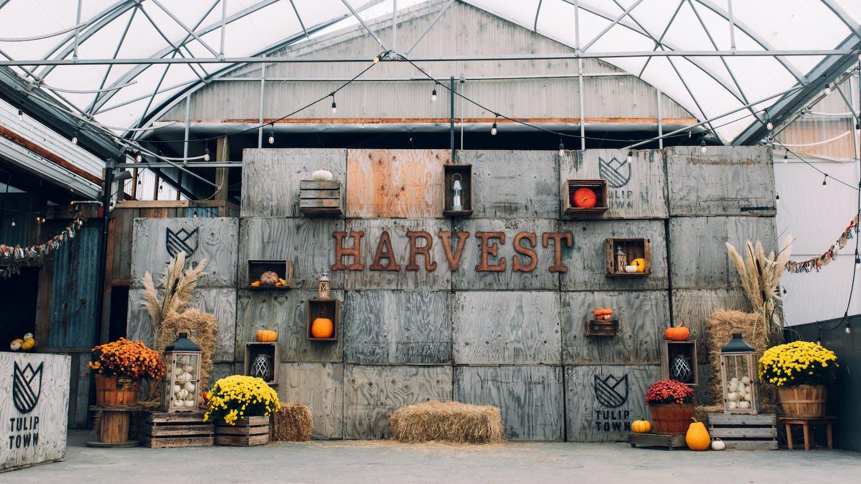 HARVEST FESTIVAL TULIP TOWN FARM